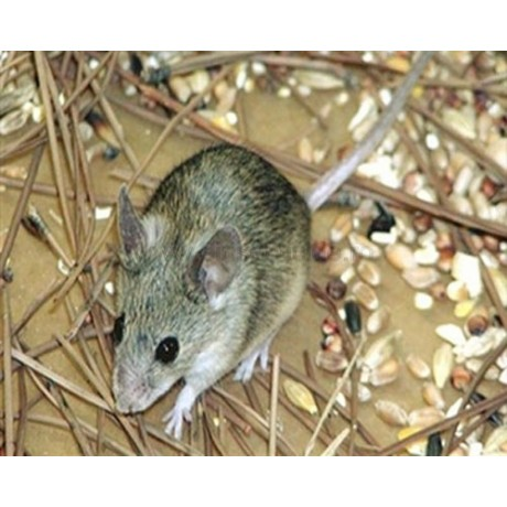 Pest Reject - Aparat universal impotriva soarecilor, sobolanilor si insectelor (150mp)