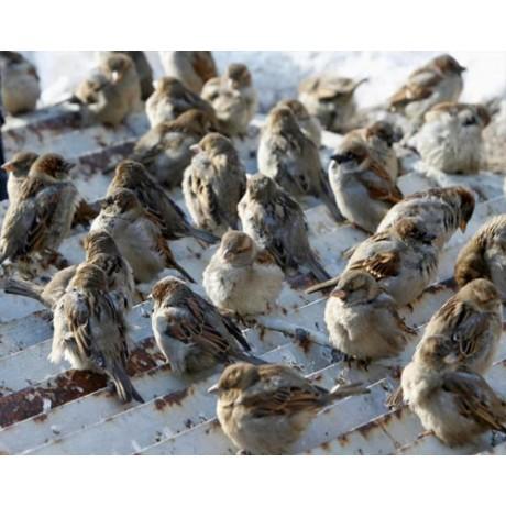 Alunga pasarile intr-un mod ecologic (70 mp) - Animal Repeller