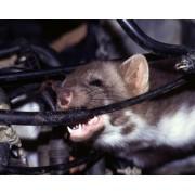 Aparat auto cu ultrasunete anti jderi, porci mistreti, vulpi, caprioare (300 mp) - M161