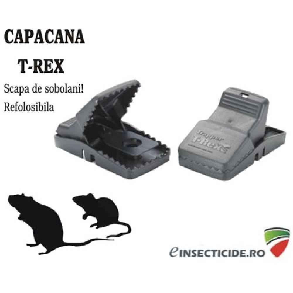 Cursa sobolani cu suport pt. substanta atractanta - T-Rex