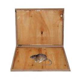 Capcana adeziva din lemn pentru capturarea soarecilor si sobolanilor - Glue Rat Wood