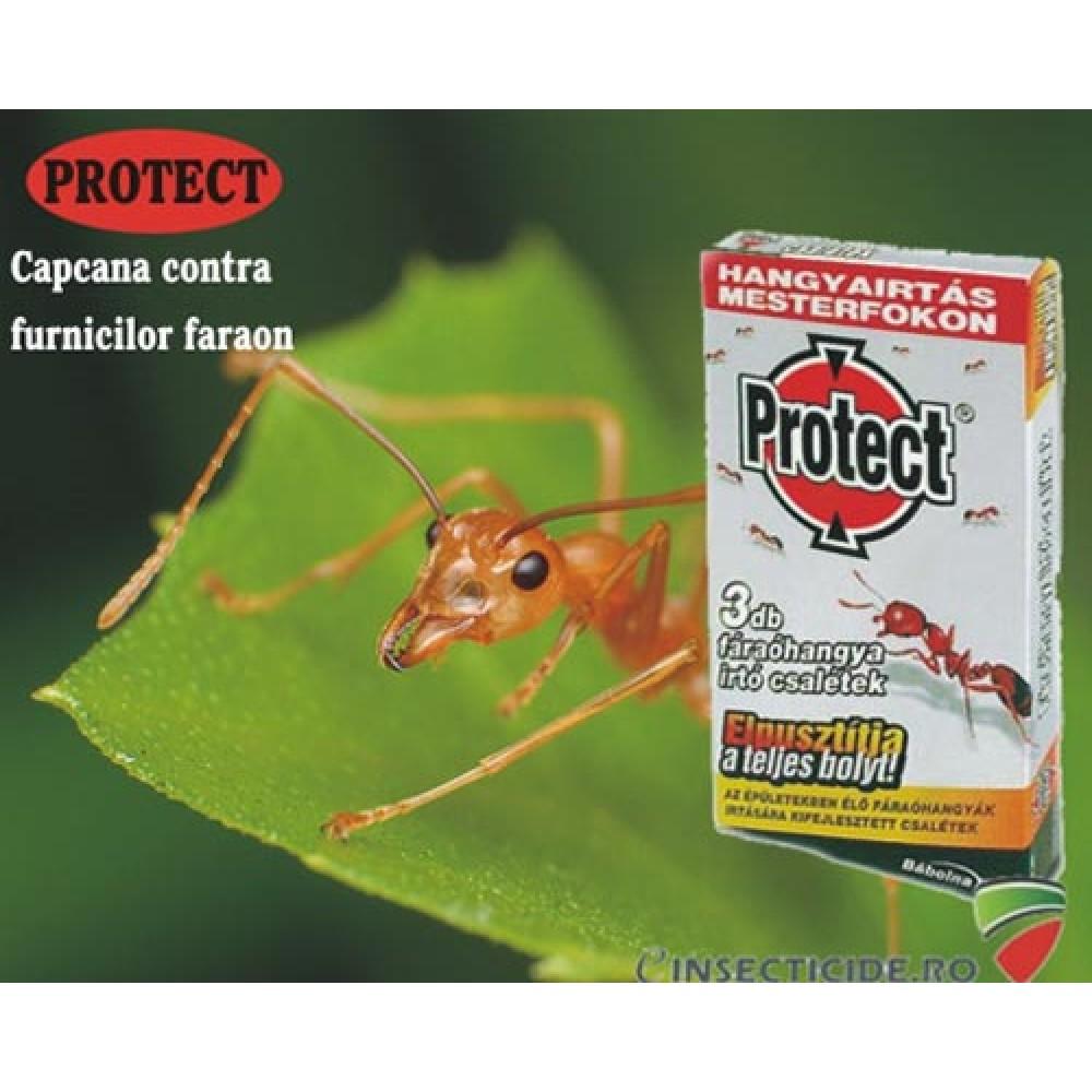 Capcana pentru furnici faraon - Protect