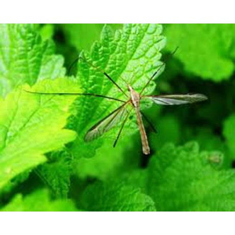 Scapa de muste si tantari cu Pertox 8 - (50ml) insecticid profesional