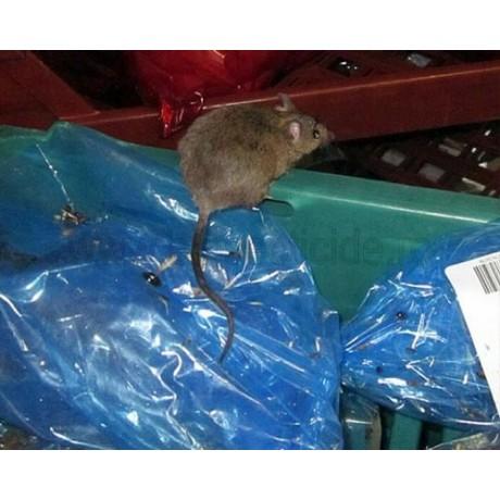 Statie de intoxicare pentru soareci si sobolani - Rat Bait